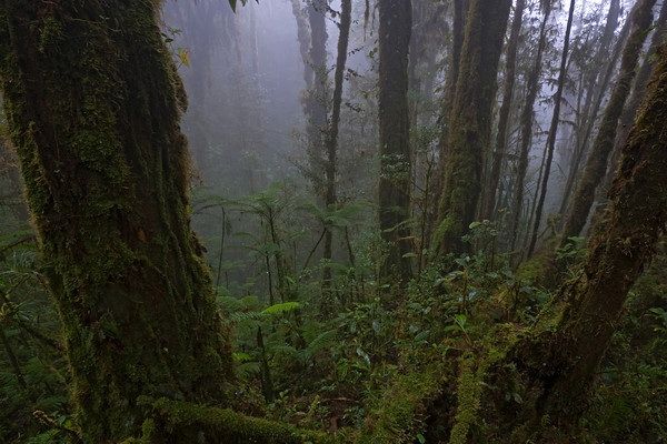 Cloud forest, Papua New Guinea