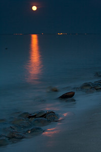 Horseshoe crabs spawning during full moon on the shores of Delaware Bay